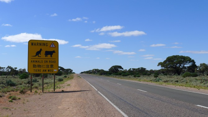 animals_on_road